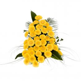 Variace žluté gerbery