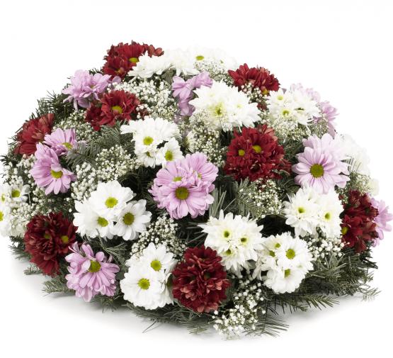 Kytice na položení barevné kopretinové chryzantémy růžové