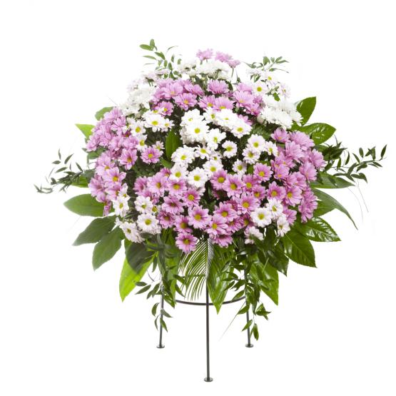 Aranžmá kopretinové chryzantémy růžovo-fialové