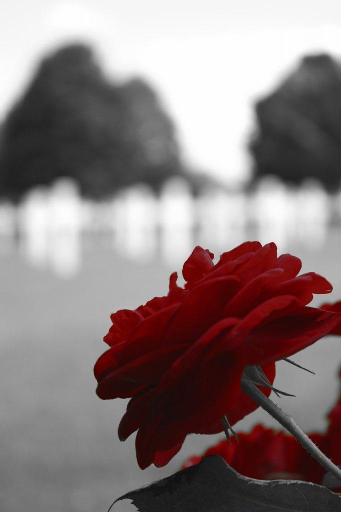 Výběr květin na pohřeb