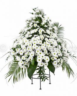 Variace bílé kopretinové chryzantémy