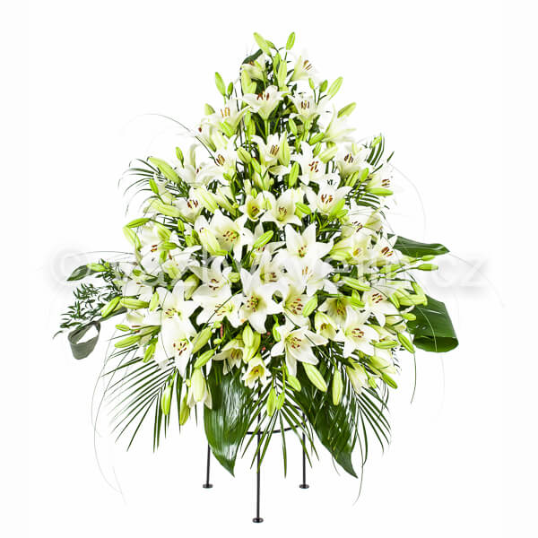 Variace bílé lilie
