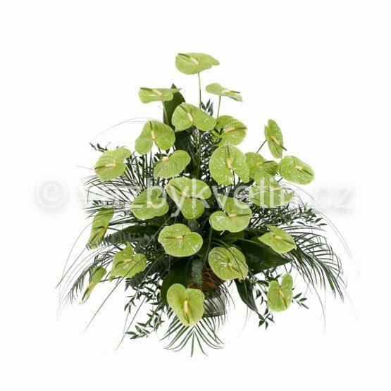 ka7-variace-zelene-anthurie